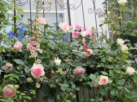 お花いっぱいの庭に近づきました~♪_a0243064_22212862.jpg