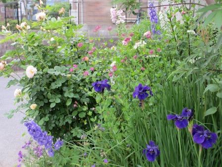 お花いっぱいの庭に近づきました~♪_a0243064_2221793.jpg