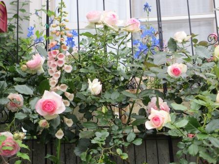 お花いっぱいの庭に近づきました~♪_a0243064_2222393.jpg
