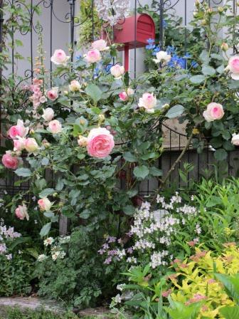 お花いっぱいの庭に近づきました~♪_a0243064_22234161.jpg