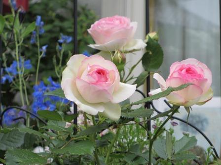 お花いっぱいの庭に近づきました~♪_a0243064_22242214.jpg