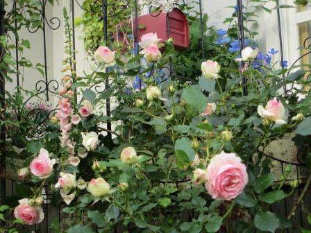 お花いっぱいの庭に近づきました~♪_a0243064_22252015.jpg