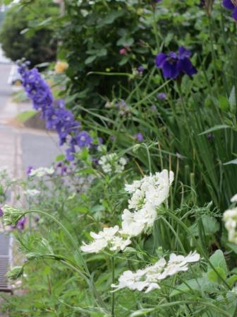 お花いっぱいの庭に近づきました~♪_a0243064_2225330.jpg