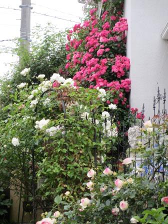 お花いっぱいの庭に近づきました~♪_a0243064_22262435.jpg