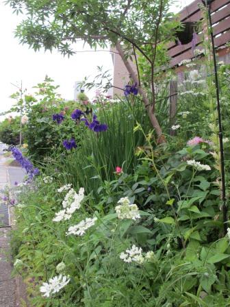 お花いっぱいの庭に近づきました~♪_a0243064_223593.jpg