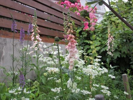お花いっぱいの庭に近づきました~♪_a0243064_2241217.jpg