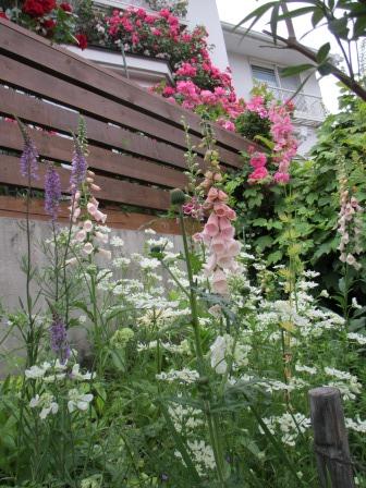 お花いっぱいの庭に近づきました~♪_a0243064_2242943.jpg
