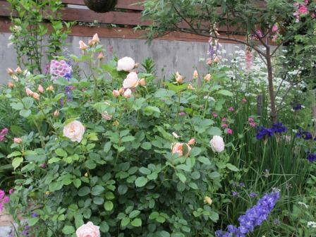 お花いっぱいの庭に近づきました~♪_a0243064_2252818.jpg