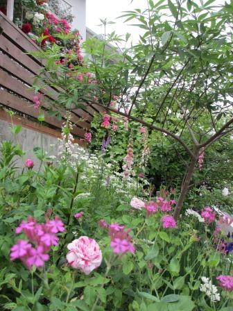 お花いっぱいの庭に近づきました~♪_a0243064_2254639.jpg