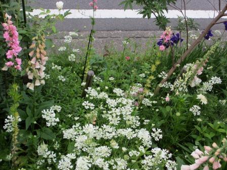 お花いっぱいの庭に近づきました~♪_a0243064_2263251.jpg