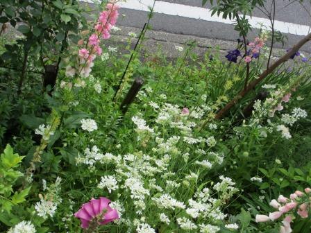 お花いっぱいの庭に近づきました~♪_a0243064_226547.jpg
