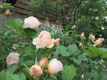 お花いっぱいの庭に近づきました~♪_a0243064_226728.jpg