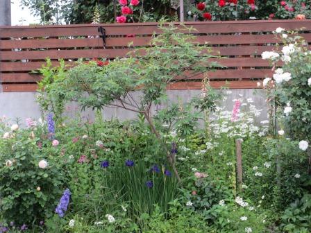 お花いっぱいの庭に近づきました~♪_a0243064_2273358.jpg