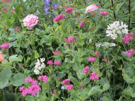 お花いっぱいの庭に近づきました~♪_a0243064_2274958.jpg
