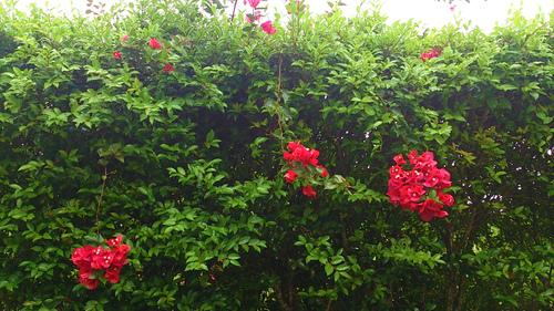 花々の誘惑。_b0240382_13254071.jpg
