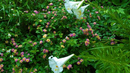花々の誘惑。_b0240382_13283371.jpg