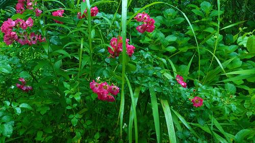 花々の誘惑。_b0240382_13312584.jpg