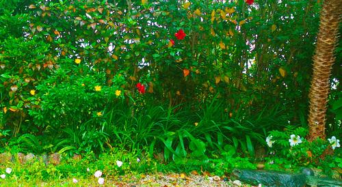 花々の誘惑。_b0240382_1347585.jpg