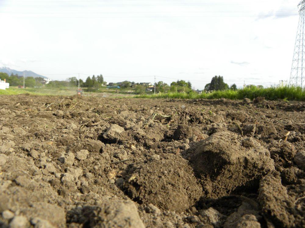 夏蕎麦の種蒔きがスタートです・・・。_b0329588_19491836.jpg