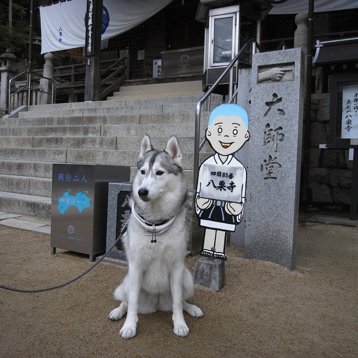 Memory of the second pilgrimage with husky HANA II_c0049299_1316615.jpg