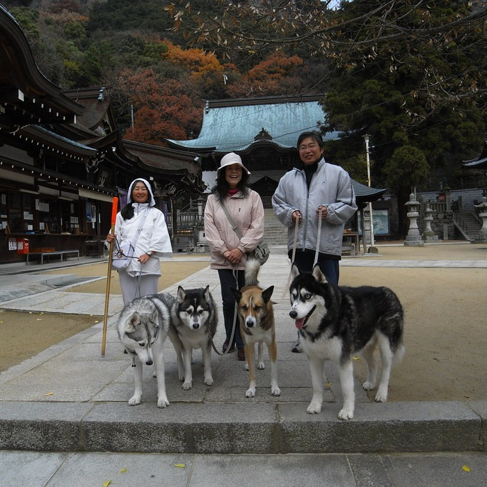 Memory of the second pilgrimage with husky HANA II_c0049299_13171696.jpg