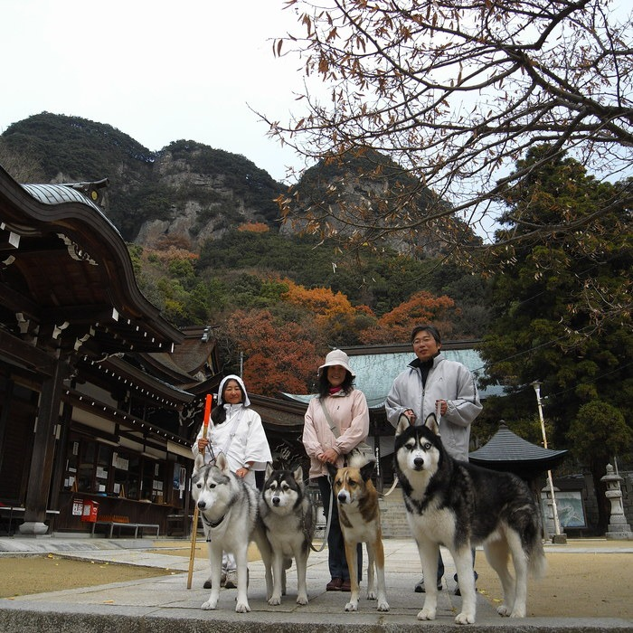Memory of the second pilgrimage with husky HANA II_c0049299_1317252.jpg