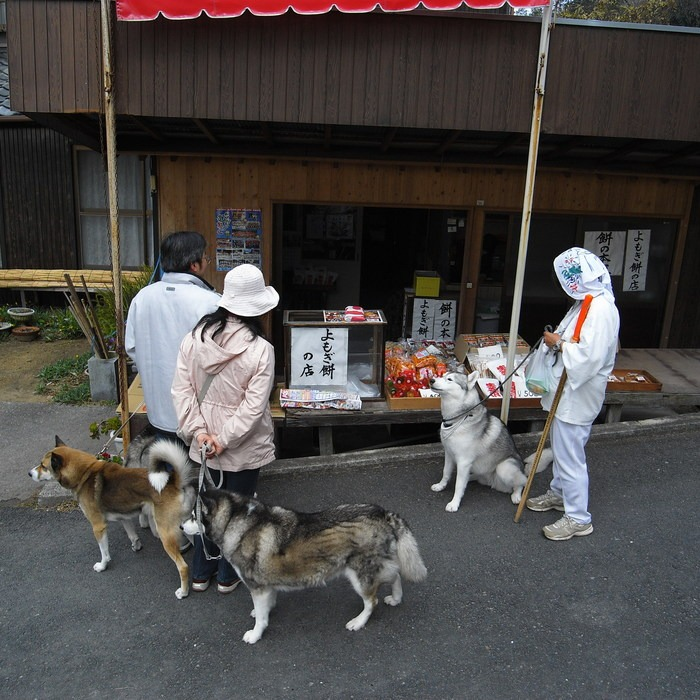 Memory of the second pilgrimage with husky HANA II_c0049299_13182717.jpg