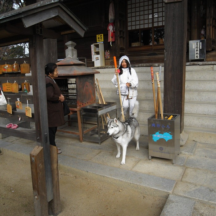 Memory of the second pilgrimage with husky HANA II_c0049299_13211870.jpg