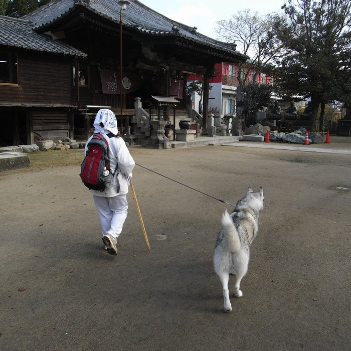 Memory of the second pilgrimage with husky HANA II_c0049299_13213583.jpg