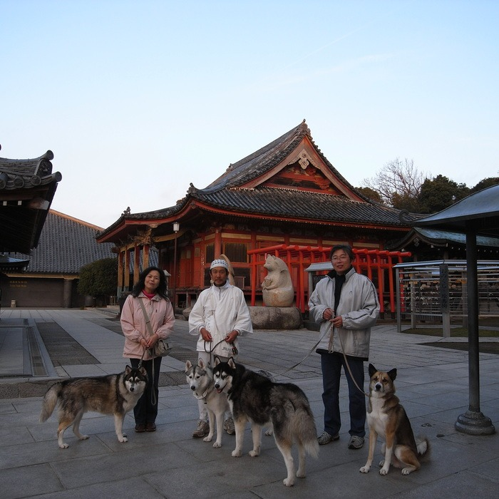 Memory of the second pilgrimage with husky HANA II_c0049299_1331578.jpg