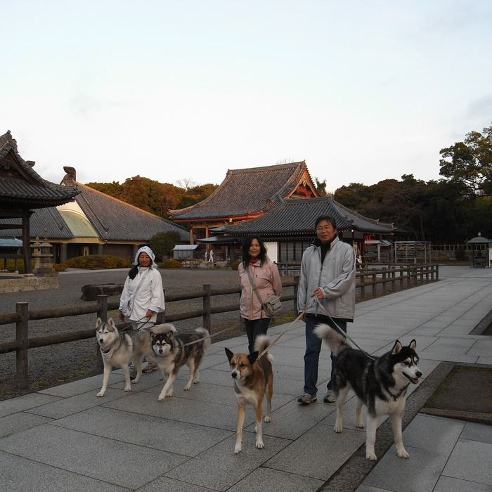 Memory of the second pilgrimage with husky HANA II_c0049299_1333725.jpg