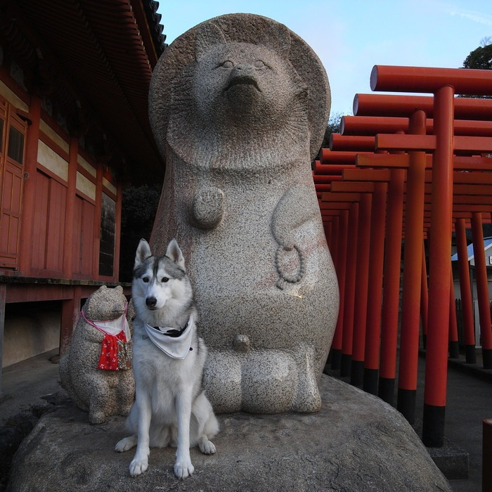 Memory of the second pilgrimage with husky HANA II_c0049299_1342090.jpg