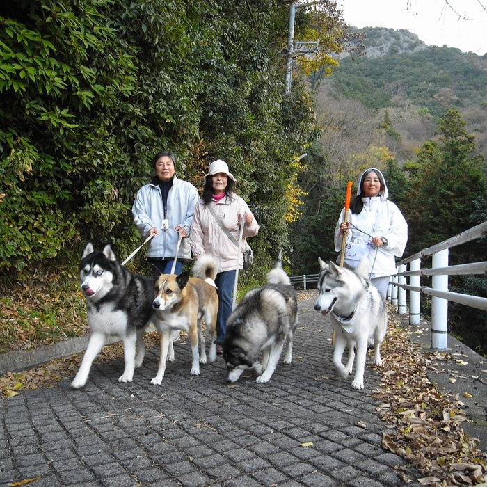 Memory of the second pilgrimage with husky HANA II_c0049299_1385067.jpg