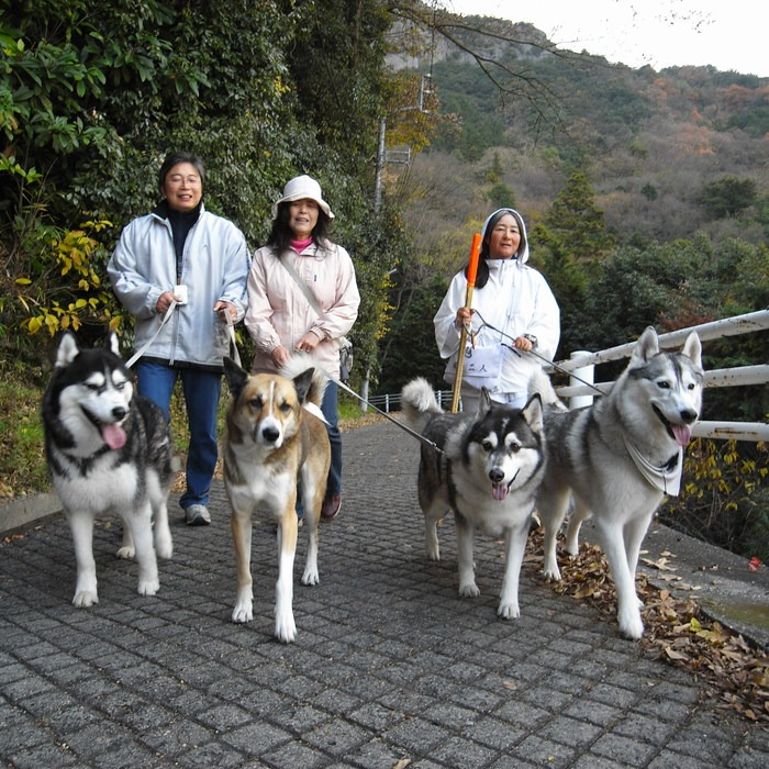 Memory of the second pilgrimage with husky HANA II_c0049299_139419.jpg