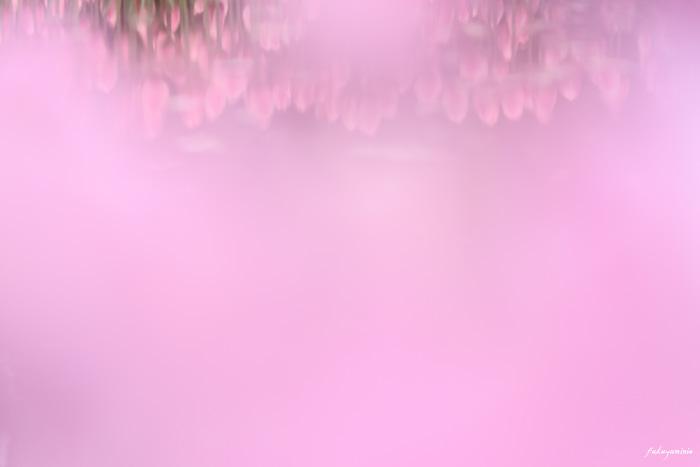 f0185802_203324.jpg