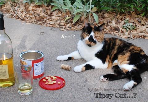 ほろ酔い気分な猫?_b0253205_341576.jpg