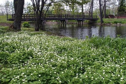 2014年5月21日(水):久々に丸山公園でキビタキを見る[中標津町郷土館]_e0062415_1831417.jpg
