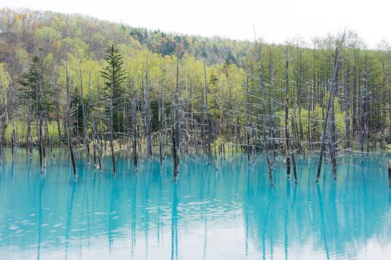 「青い池」と「青い川」のTV放映_e0025030_10155371.jpg