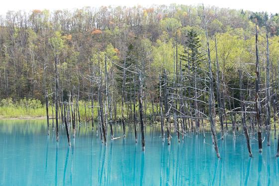「青い池」と「青い川」のTV放映_e0025030_10155679.jpg