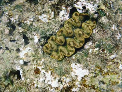 カーミージーの海の散策⑬_c0180460_15243712.jpg