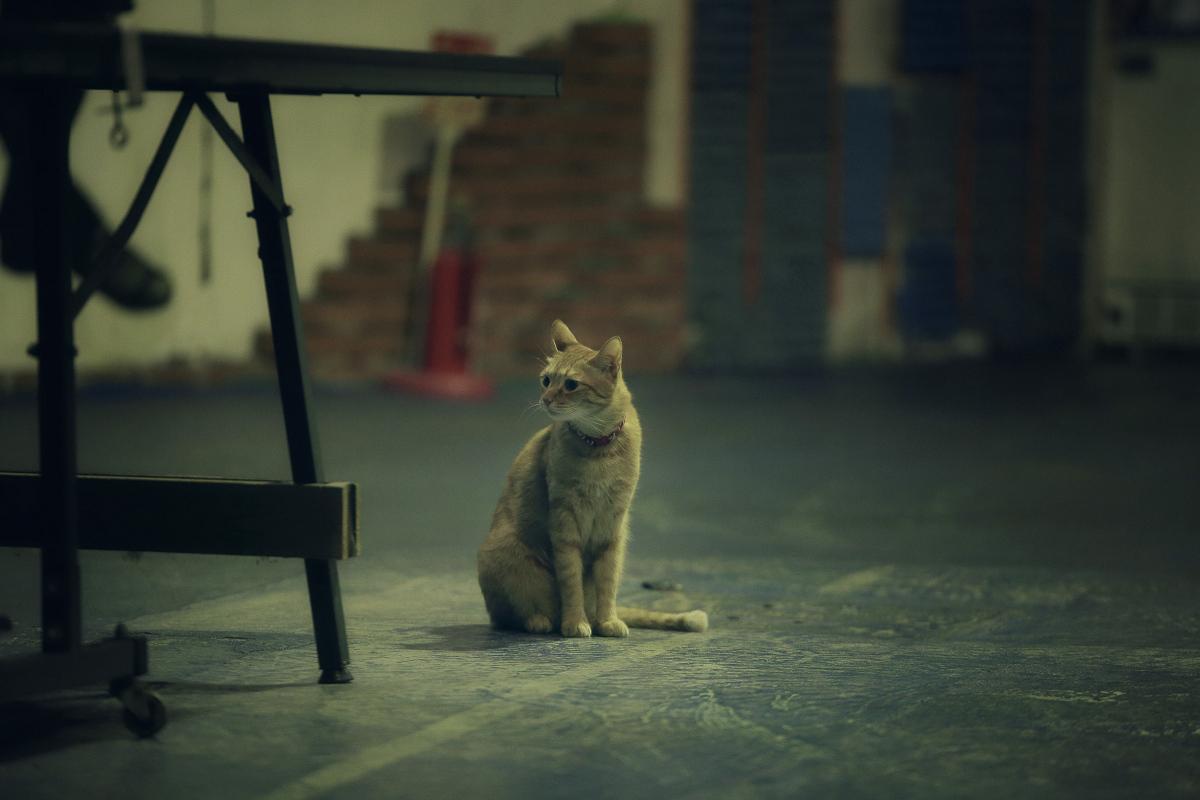 猫にゃん_f0021869_012024.jpg
