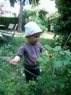 お庭のラズベリー2014_a0169172_5372348.jpg