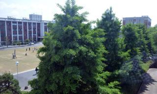 ポカポカ陽気の芝の広場では学生さん達が....サッカーやら..._b0194185_23164942.jpg