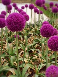 紫の、、、。_d0178587_13424978.jpg