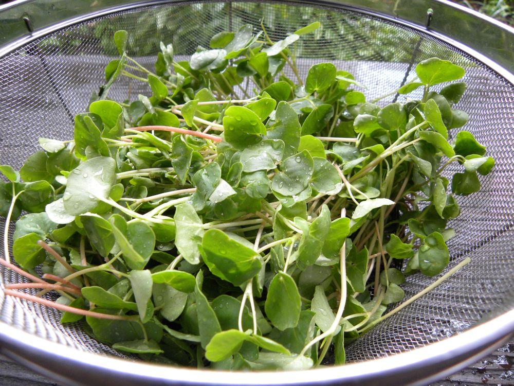 サラダ蕎麦 収穫です・・・。_b0329588_17181859.jpg