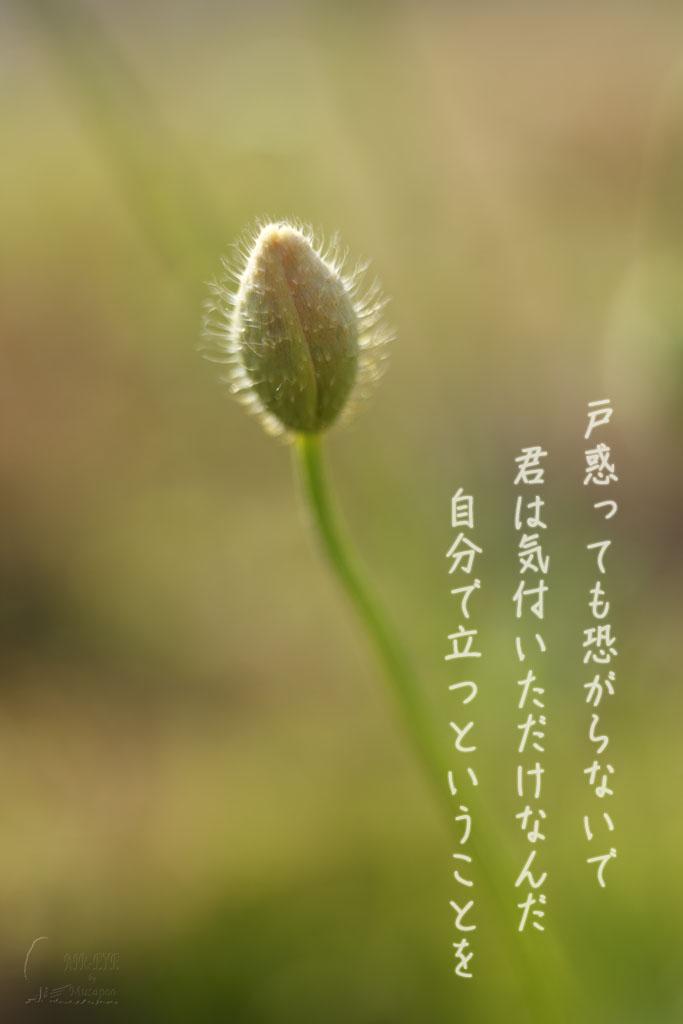 無題_b0064396_21405398.jpg