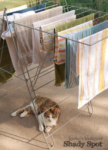 洗濯物の日陰の下で_b0253205_1581117.jpg