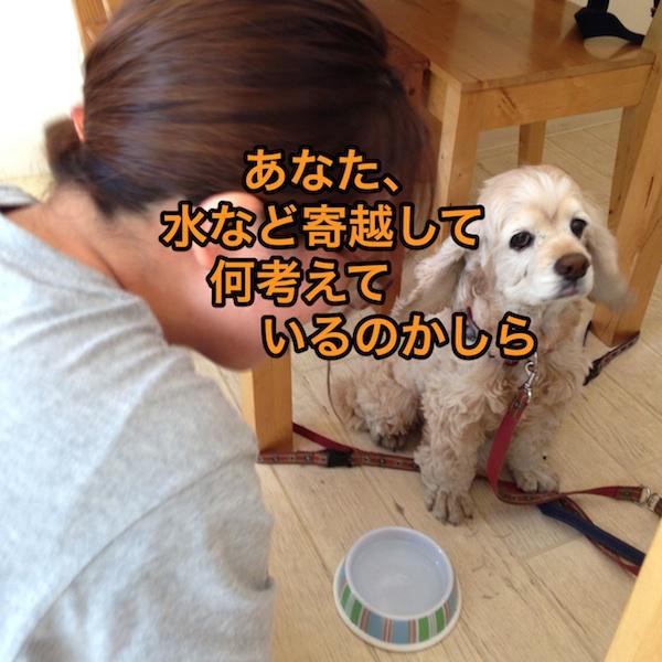 b0067012_0155036.jpg