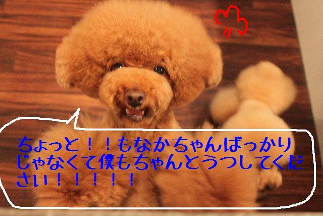 b0130018_11565466.jpg