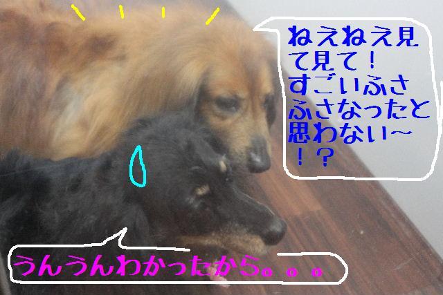 b0130018_12131640.jpg